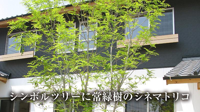 庭のシンボルツリーに常緑樹のシネマトリコ
